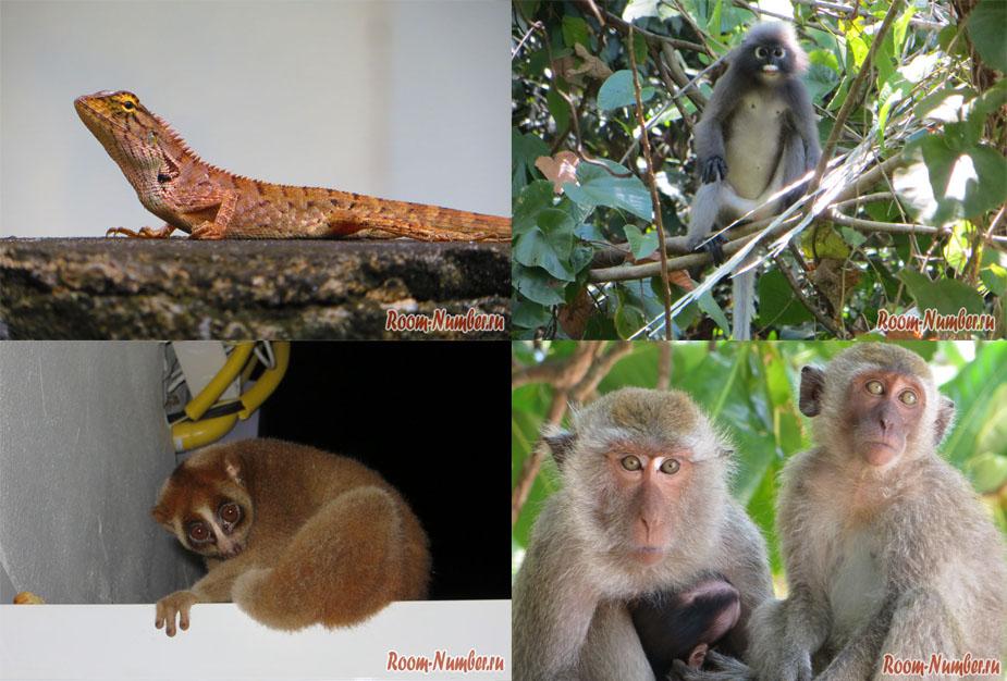 Животные в Краби