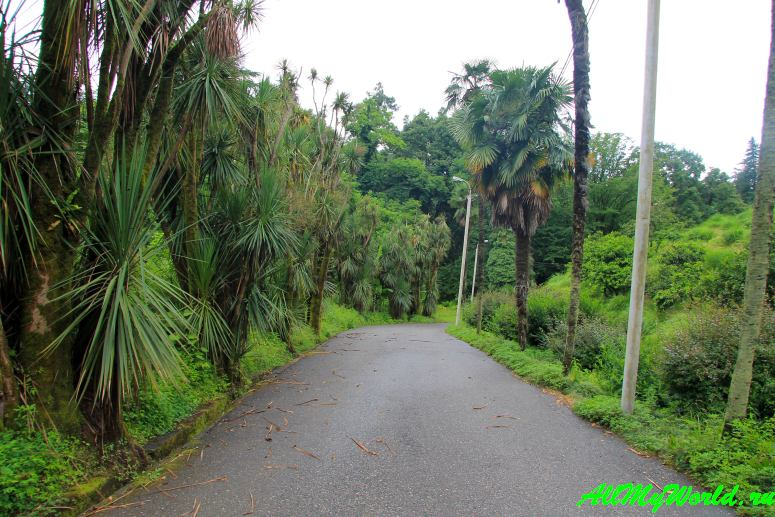 Как доехать в ботанический сад батуми