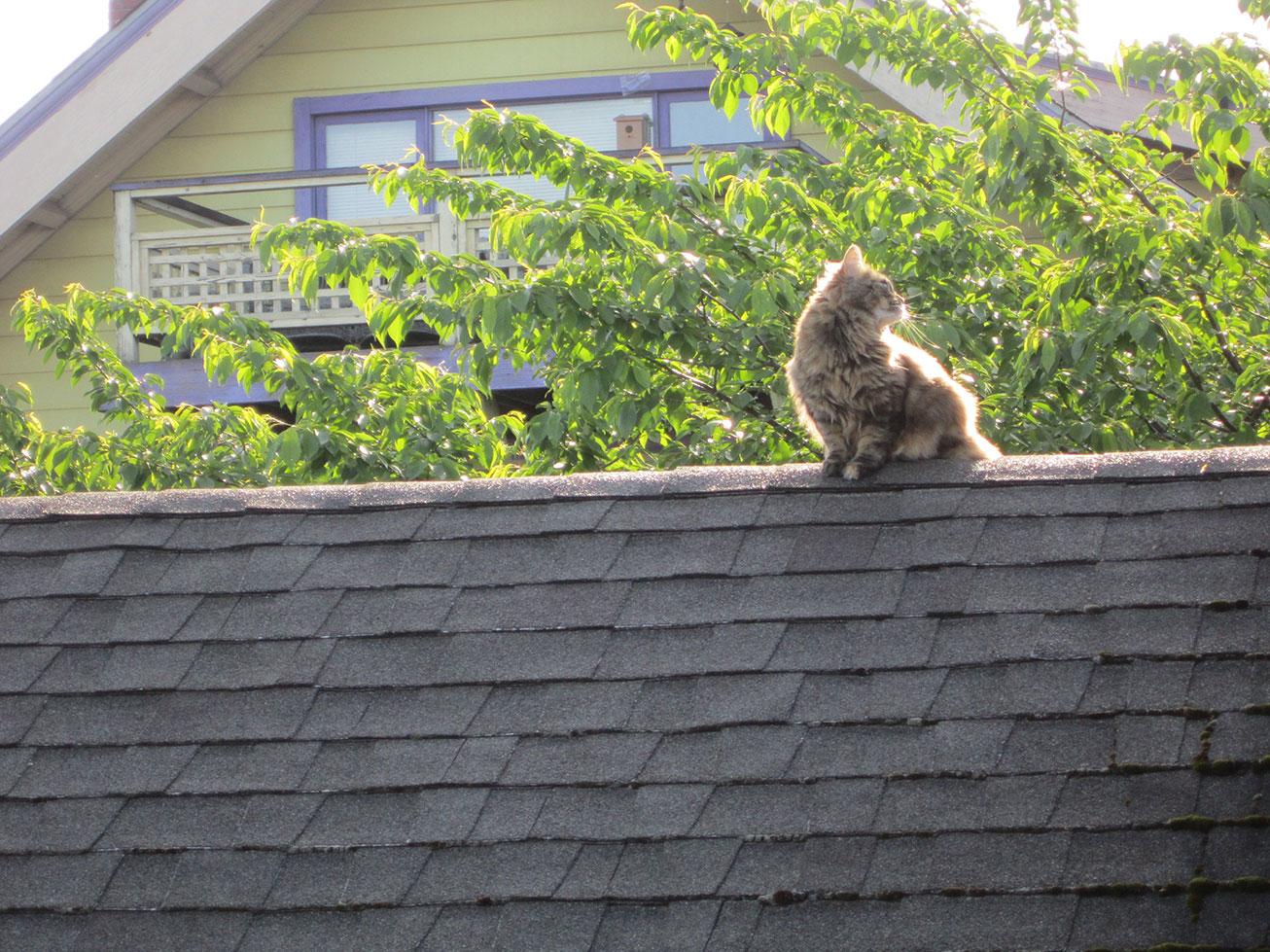 root-cat