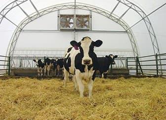 Бизнес фермерское молоко