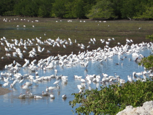 Birding the Refuge FREE Tuesday Tour