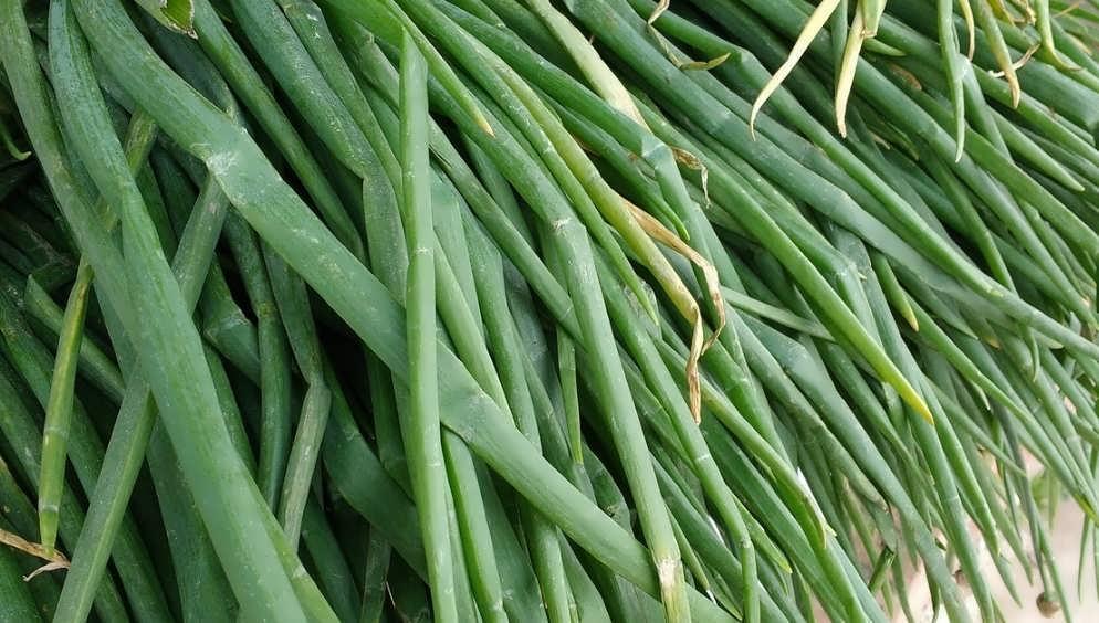 Бизнес план выращивания репчатого лука