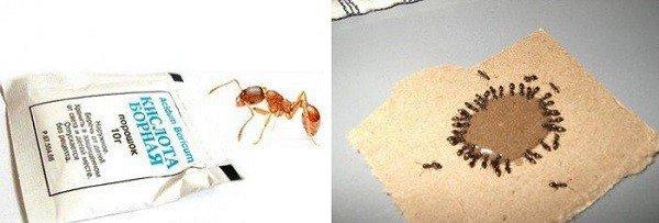 Народные методы борьбы с муравьями