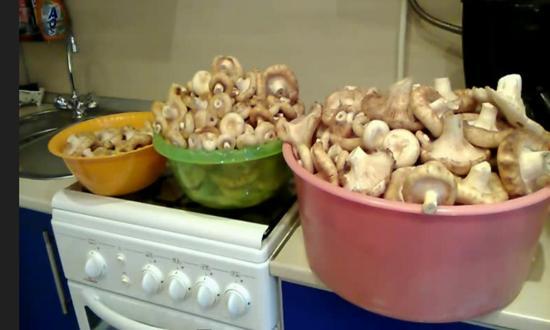 почистили грибы