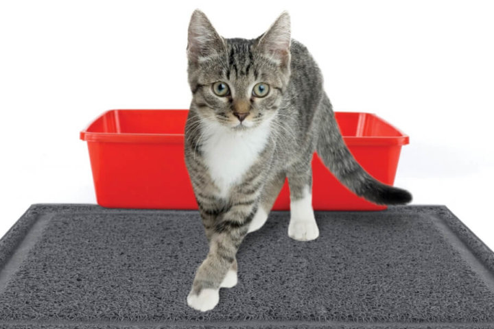Непривлекательный кошачий лоток