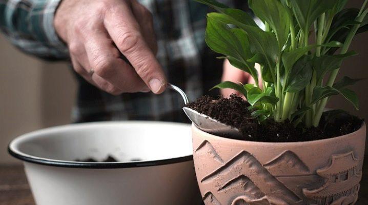 Спатифиллум какая нужна почва