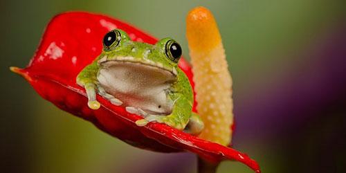 приснилась маленькая лягушка