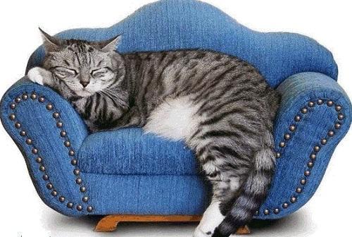 Отмыть диван от кошачьей мочи