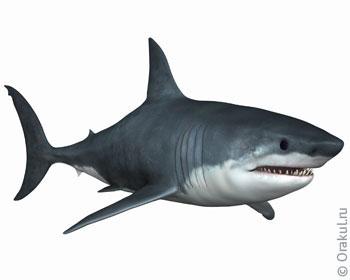 Плавать с акулой во сне