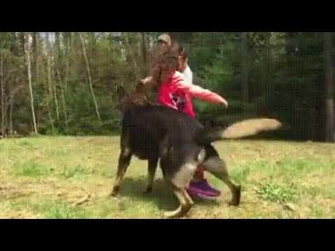 Когда спросят можно ли собаку детям