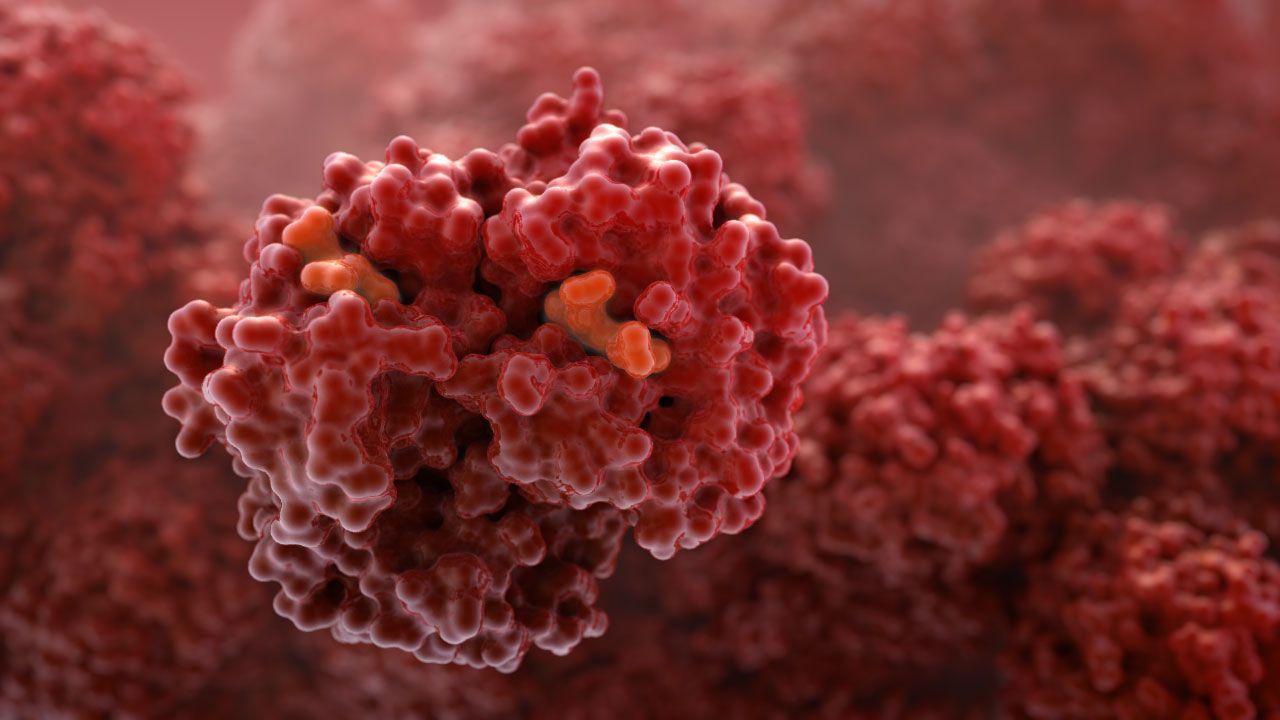 The hemoglobin molecule