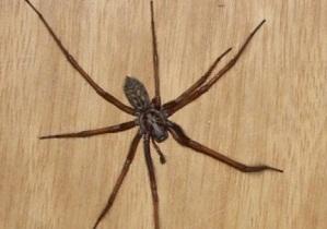 Почему пауки дома