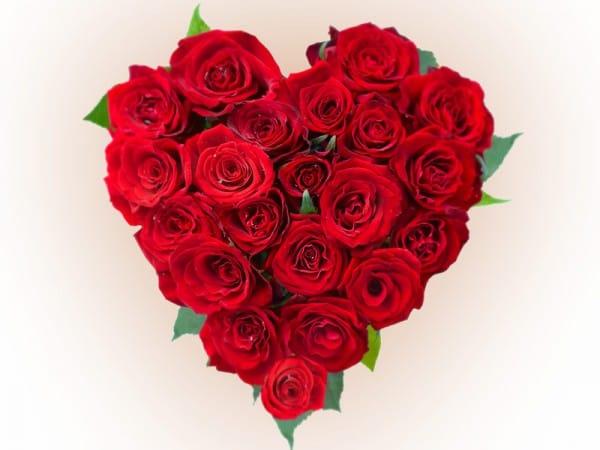 Сон красная роза