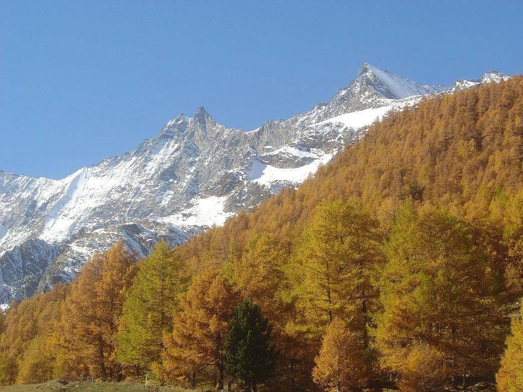 Mischabel mit Bergwald