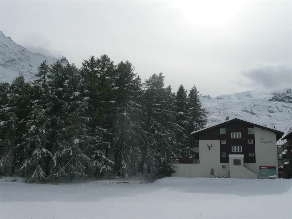 Am Vogelwald im Winter