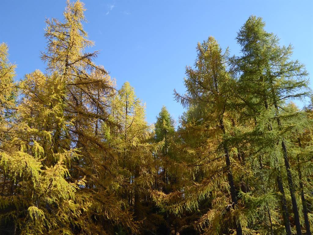 Frühherbst Am Vogelwald