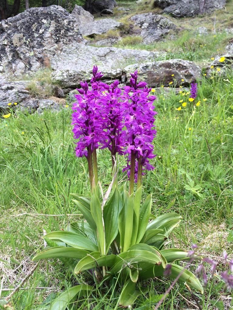 Unbekannt Blume vom Saas