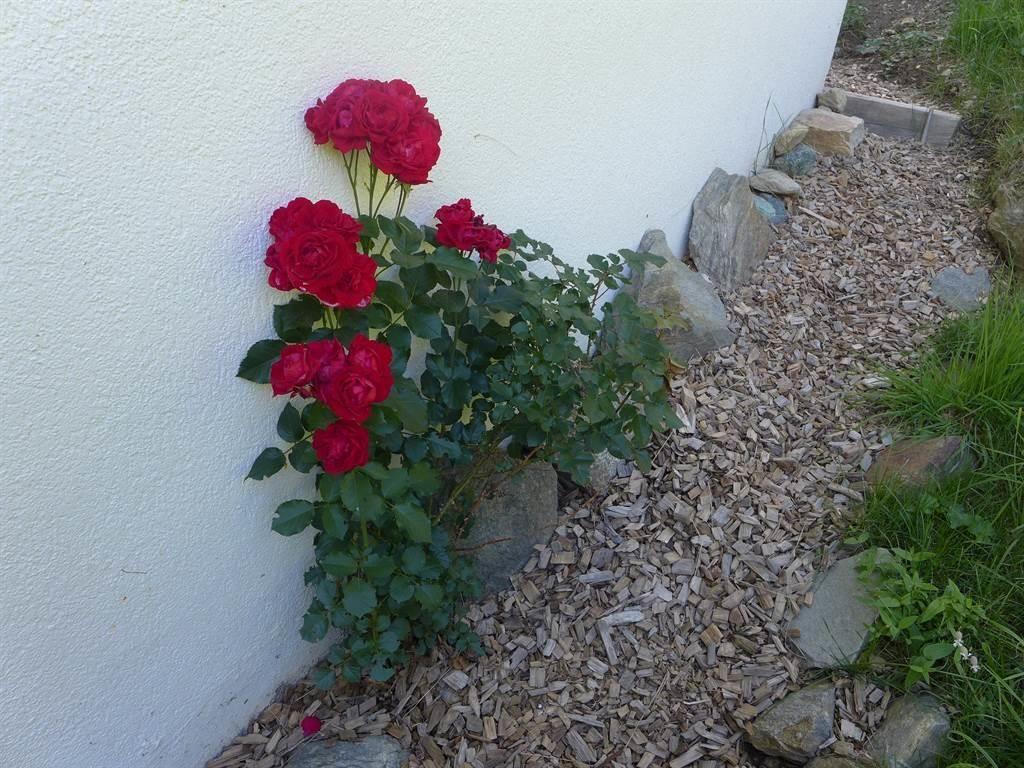 Blumen Acimo Eingang