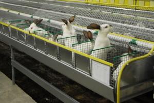 Рентабельность разведение кроликов