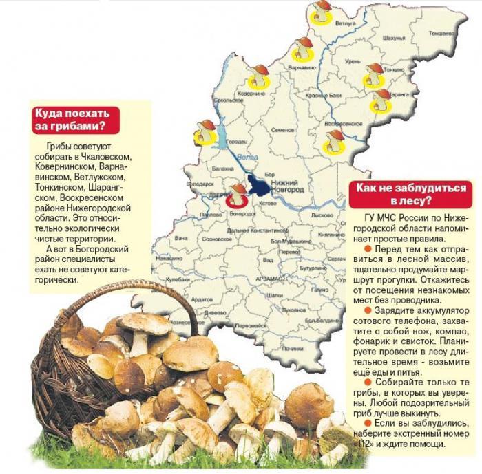 Где в нижегородской области белые грибы