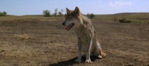 Dances With Wolves - Frant