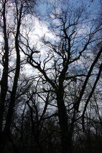 В голосіївському лісі