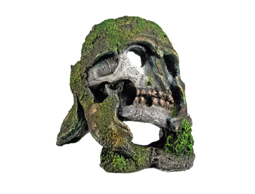 Skull aquarium ornaments head skeleton with hide hole for Fish tank skull decoration