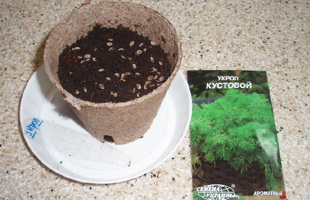 Посев укропа