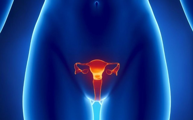 Сколько сантиметров до матки и какова глубина влагалища?