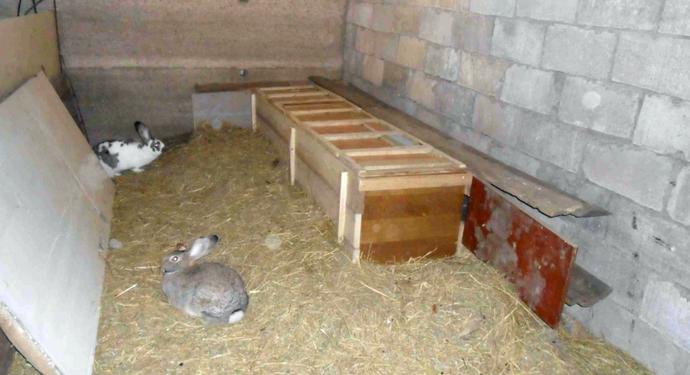 Кролики в гараже