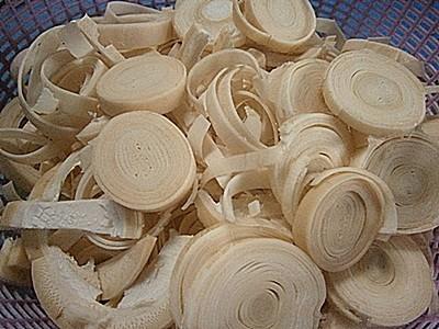 Bambusa spp.