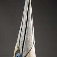 Gannet head