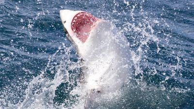 Shark Documentaries