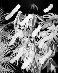 Jaya Pelupessy, Plants