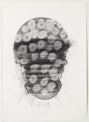 Karin van Dam, The Path of the Caterpillar