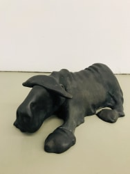 Tom Claassen, Untitled (Buffel/Buffalo)