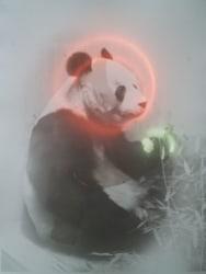 Melanie Bonajo, Völkerschau: Panda