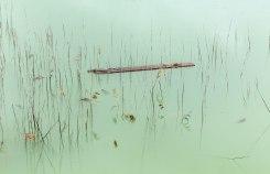 Natascha Libbert, Lily's water