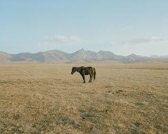 Matthieu Litt, Untitled #23 from Horsehead Nebula