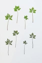 Anne Geene, Eeuwig Herbarium #25