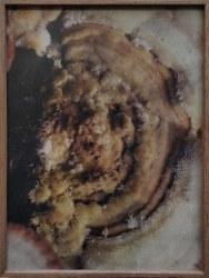 Dries Segers, fungi C001