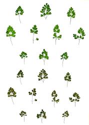 Anne Geene, Eeuwig Herbarium #16