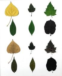 Anne Geene, Eeuwig Herbarium #30