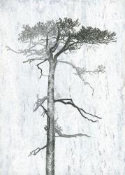 Sandra Kruisbrink, Pinus Sylvestris, Krossfuru II