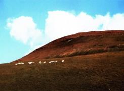 mountain, mountain, Nicoline Timmer