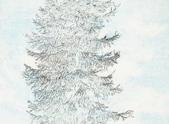 Naar de boomgrens, Sandra Kruisbrink