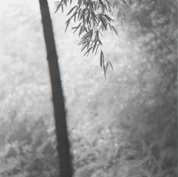 Choi Byung-Kwan, Bamboo Grey #8