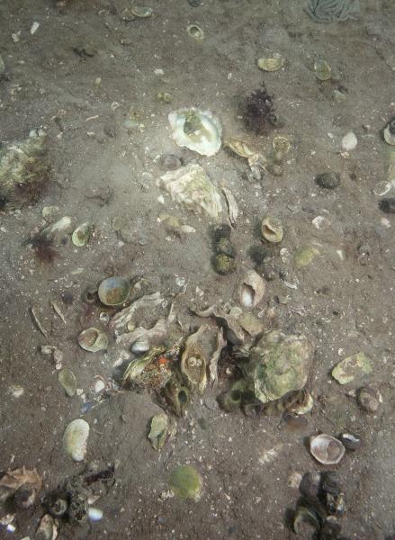 Elspeth Diederix, Shell Floor