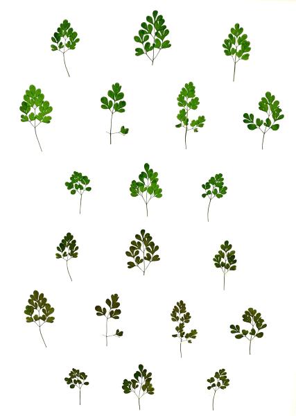 Eeuwig Herbarium #16