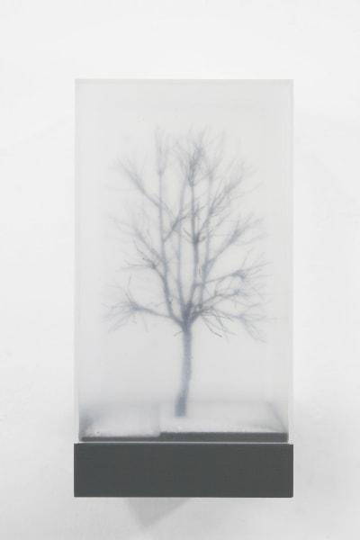 Maurice van Tellingen, Winter boom